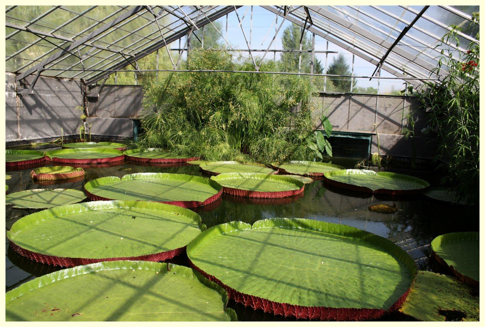 El jard n de margarita otros jardines viveros latour for Vivero el jardin