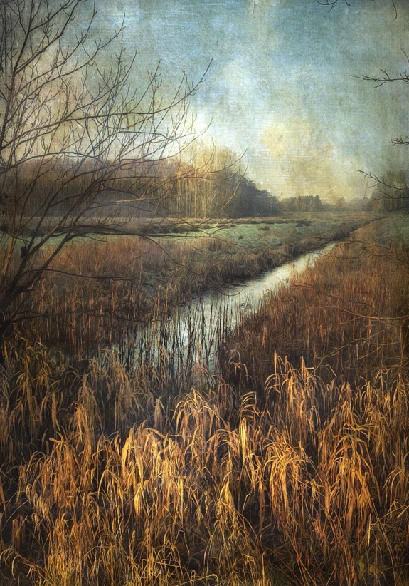 Towards the Marsh © Sarah Jarrett