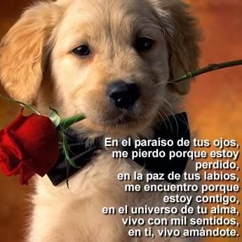 Imagenes bonitas de amor y corazones - poemas - pensamientos - versos - poesias