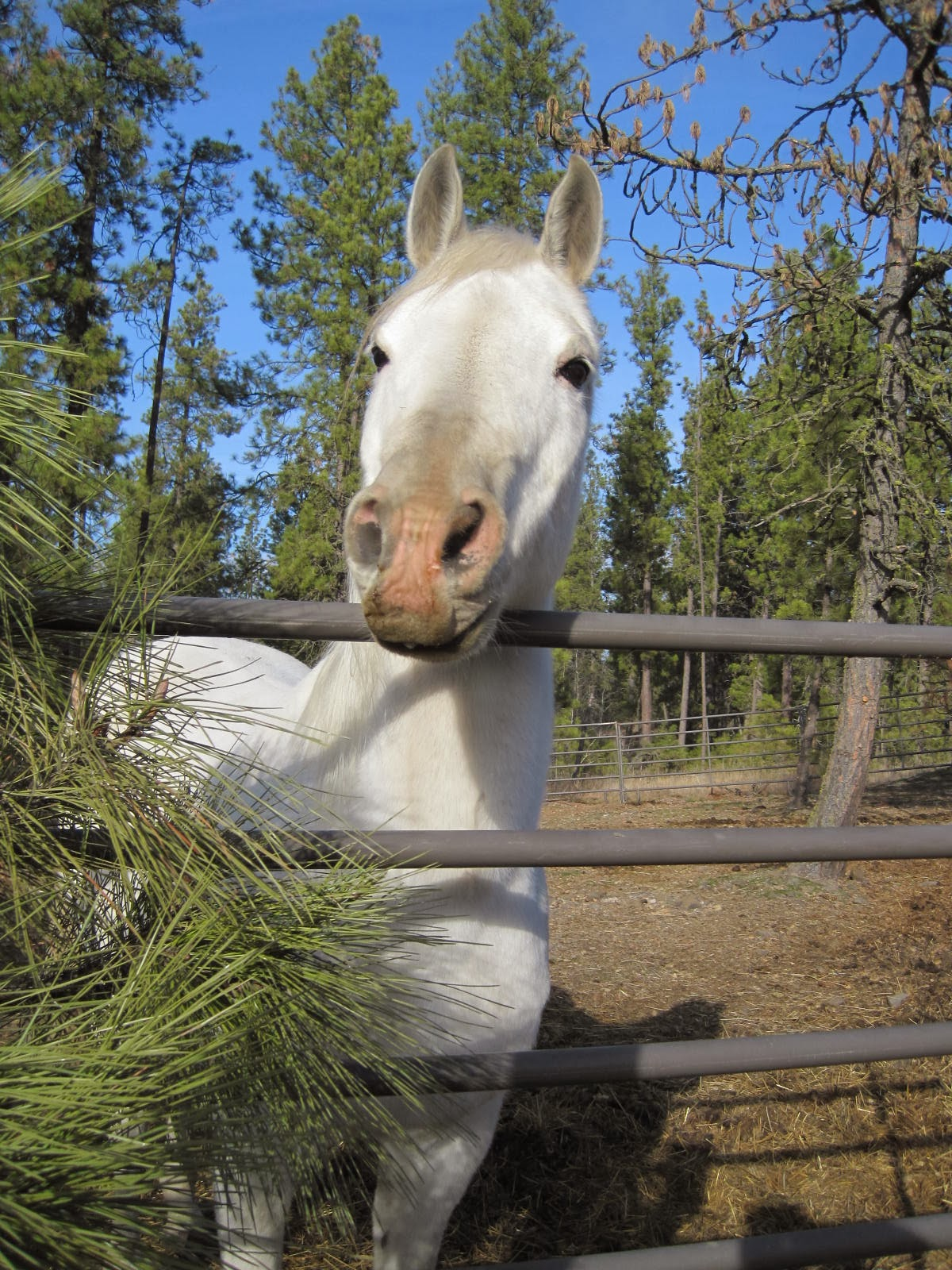 white products hiqual hay saver feeder horse tombstone