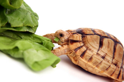 Exotic Pets Unlimited: Why eat turtles? Discover it!!