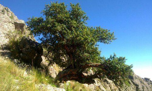 Noticias ambientales de la provincia de c rdoba un vivero for Viveros en cordoba