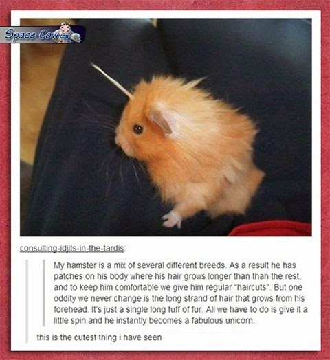 funny cute hamster picture