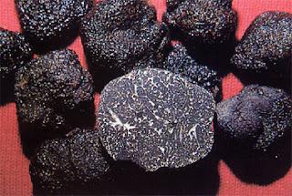 Tuber melanosporum - Trufa negra