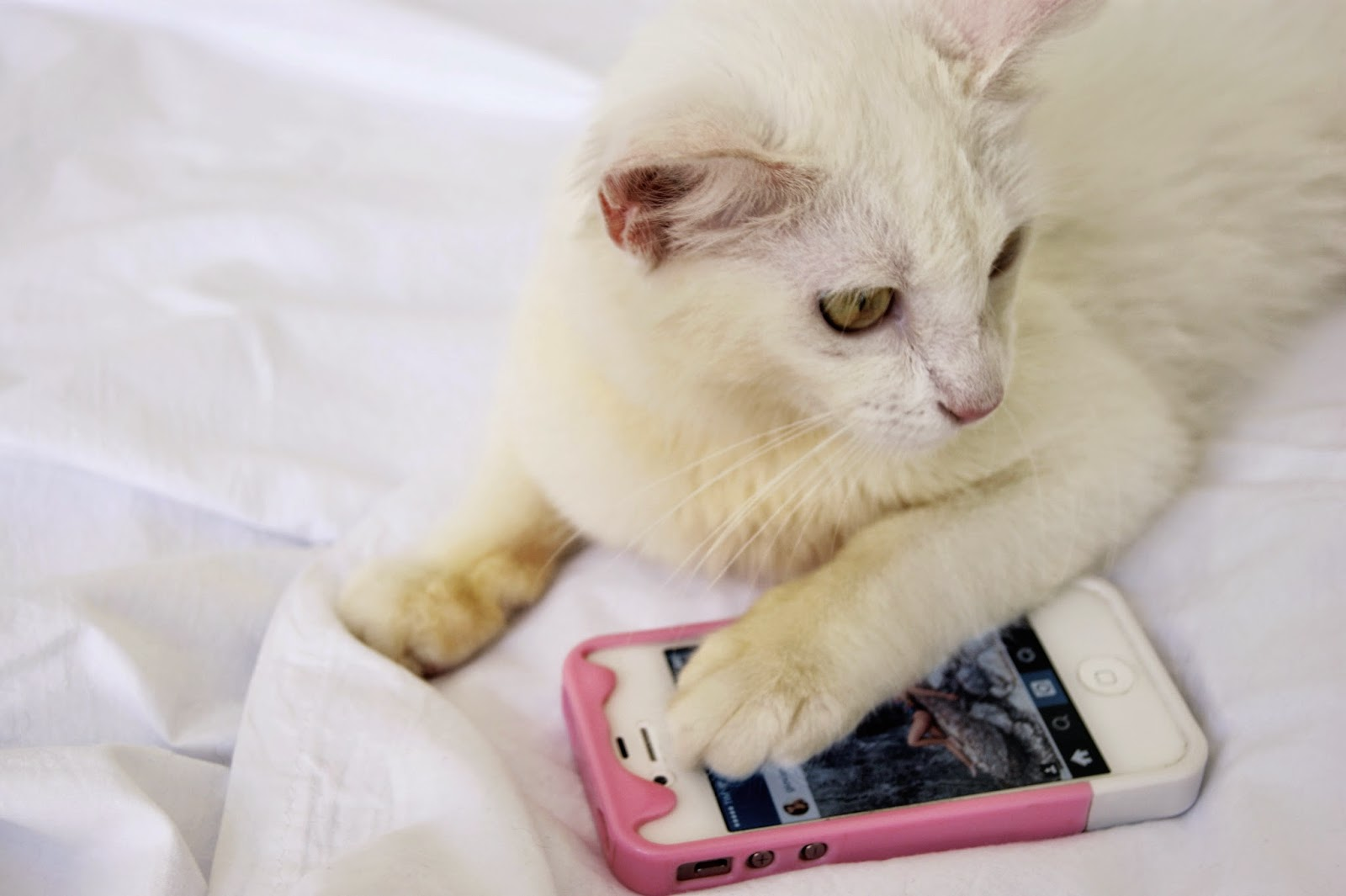 cat and iphone