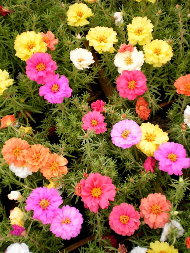 Hartmann Como Plantar Um Jardim De Flores Ptaxdyndns on Pinterest