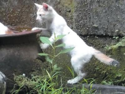 Foto-Foto Anak Kucing Lucu di Luar Jendela Kamar Kost Gue 03