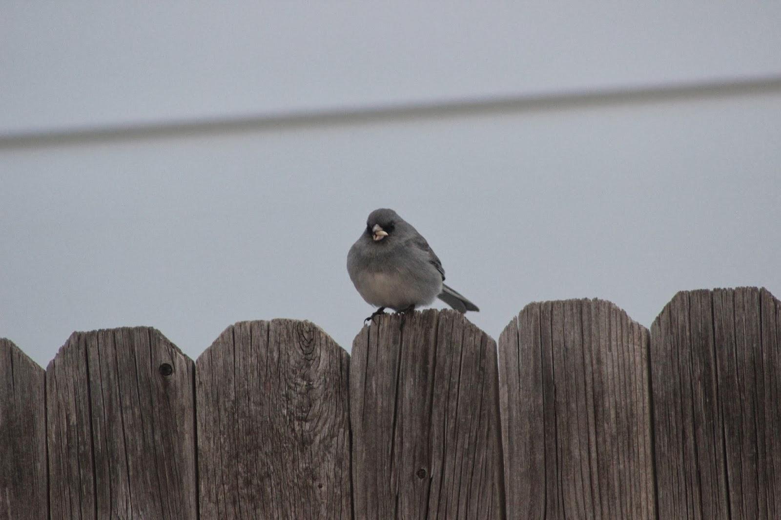 Mantener caliente en invierno es para los pájaros | Smithsonian Insider