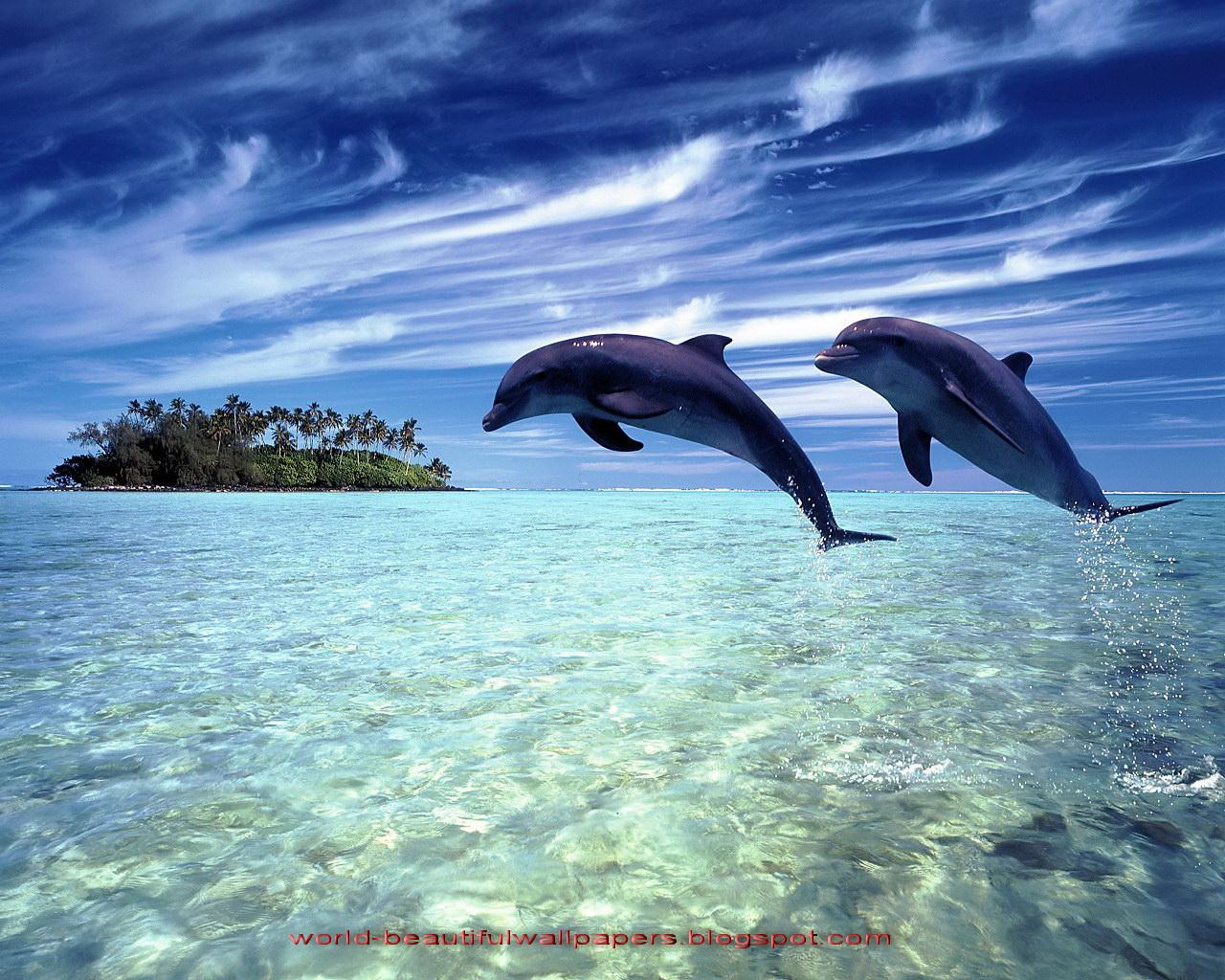 Beautiful wallpapers beautiful dolphins for Imagenes bonitas para fondo de pantalla