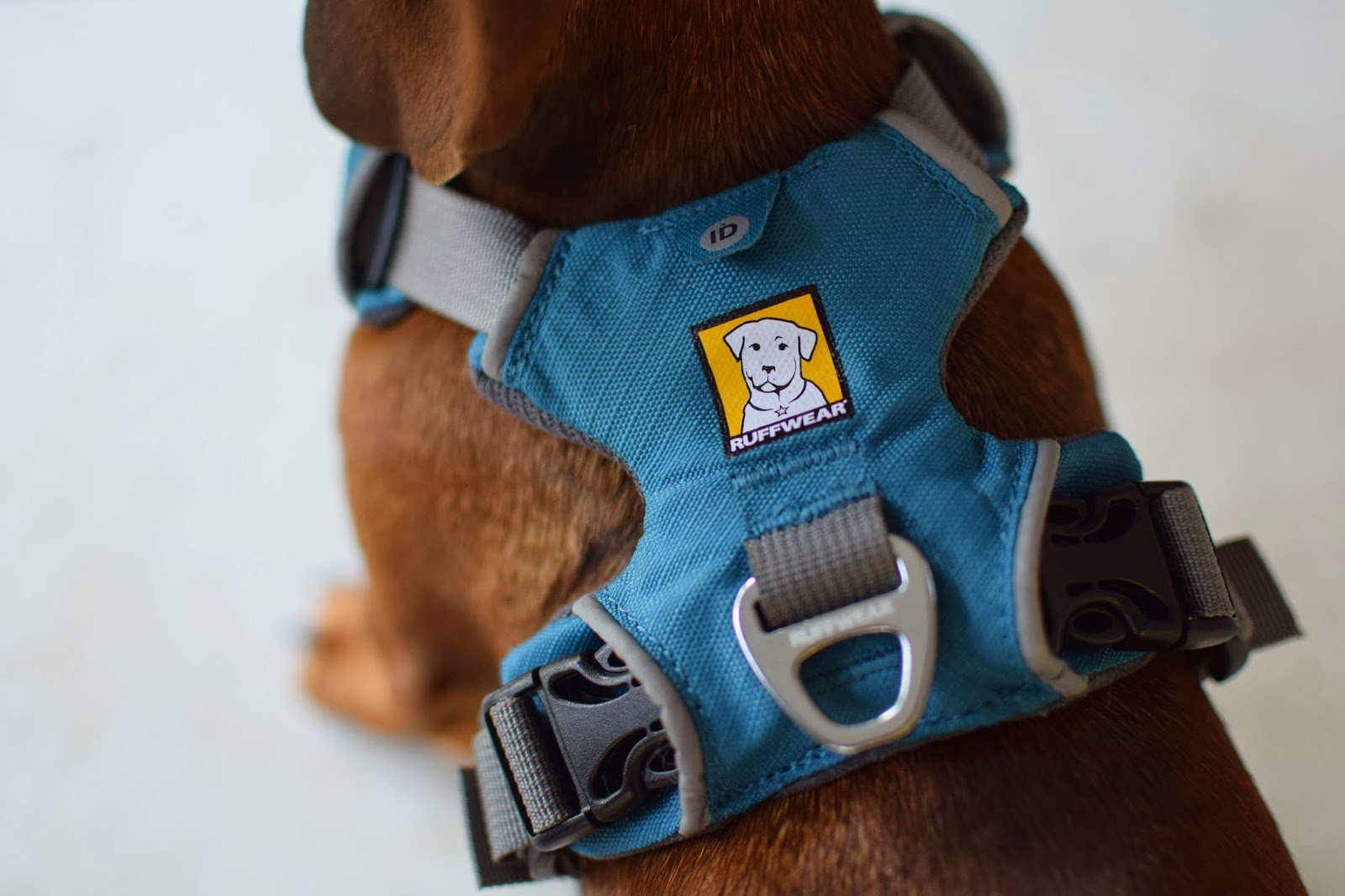 kurgo dog harness instructions
