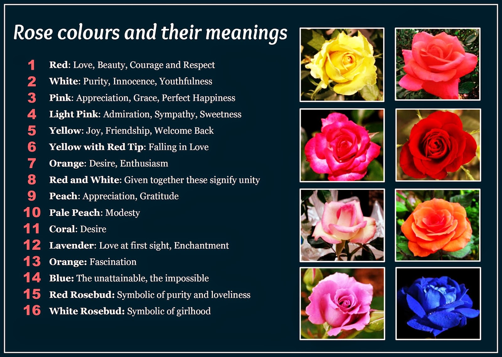 Meanings Of Colors daveswordsofwisdom: beautiful rose colors and their meanings.