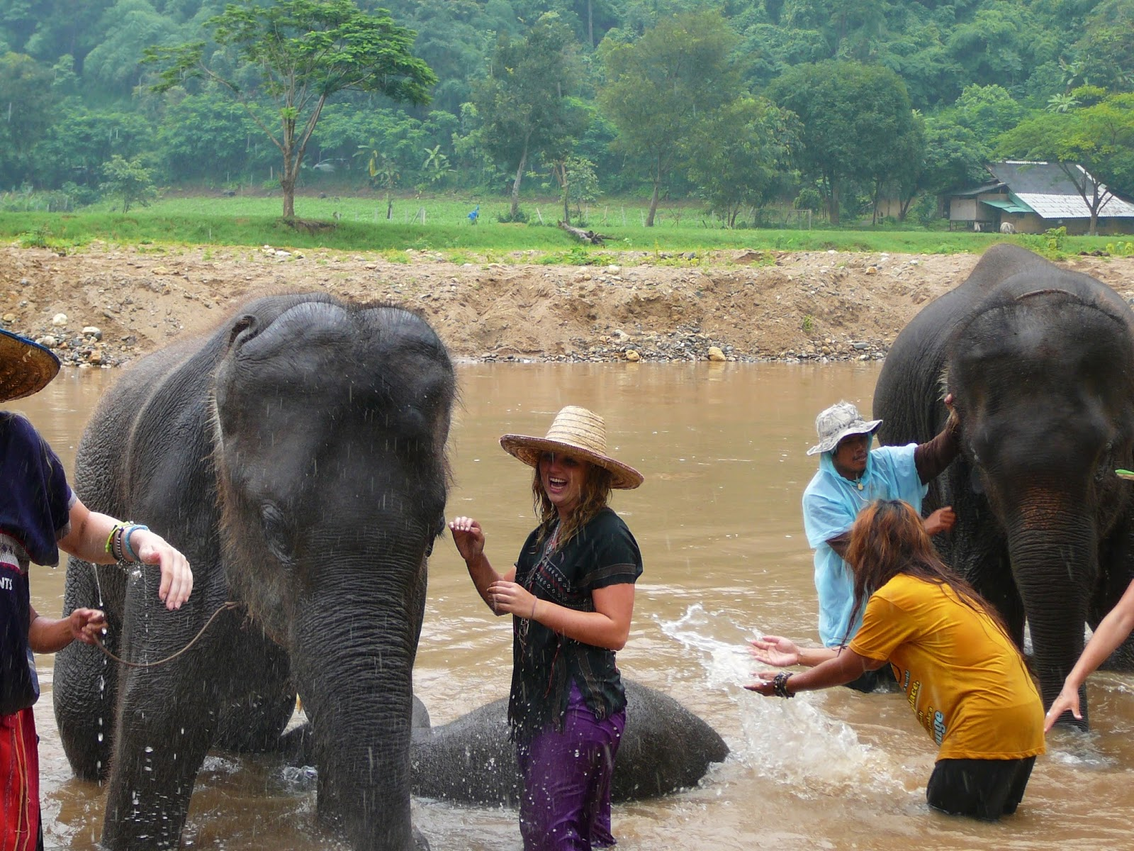Washing elephants in Chaing Mai, Thailand