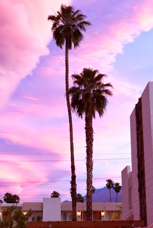 California Palm Trees | TastesSoGoodBlog.Blogspot.com