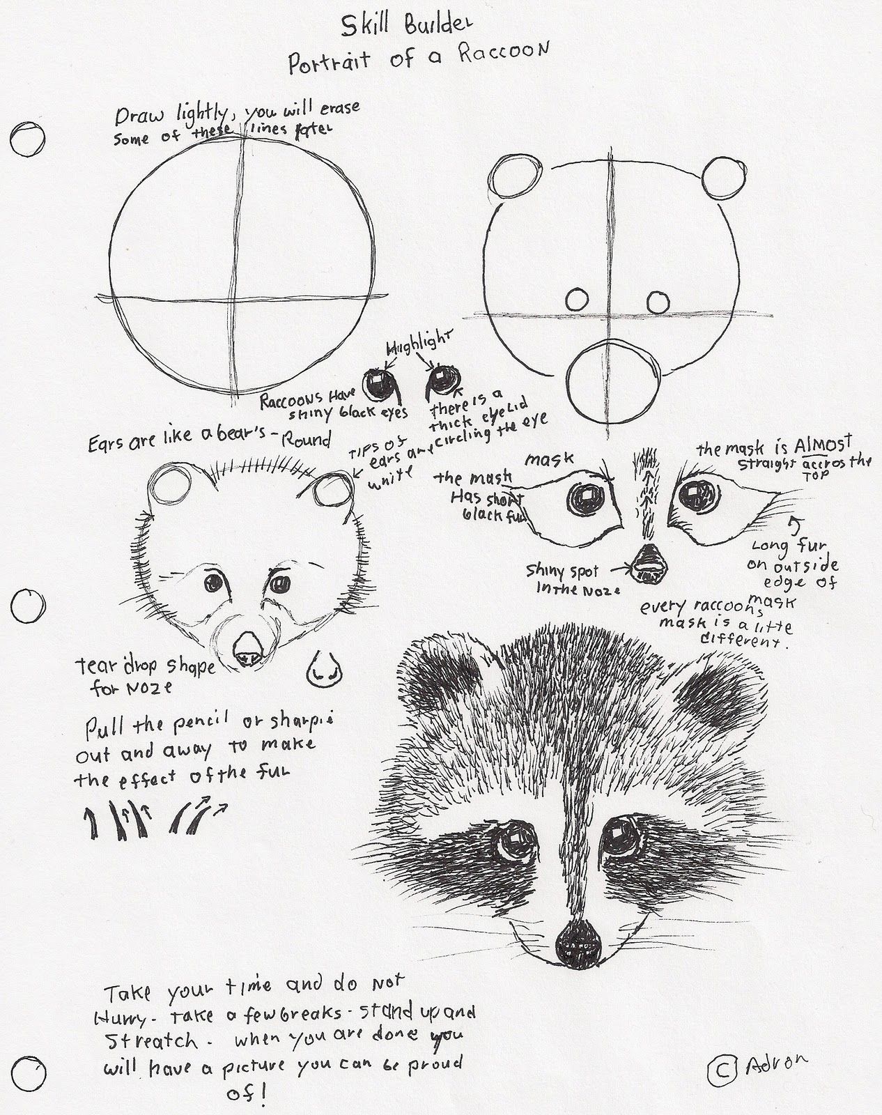 Viewing Gallery For - Raccoon Face Drawing