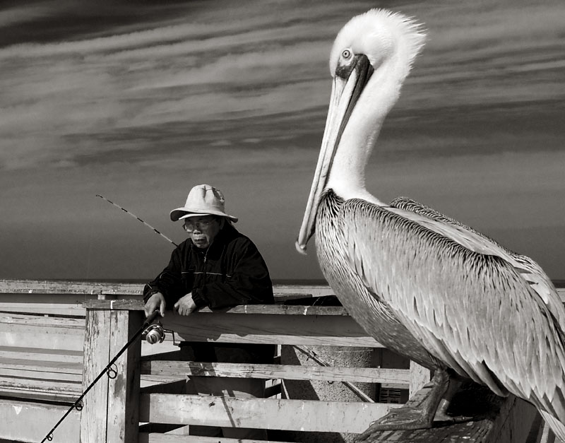 Pelican and fisherman; click for previous post