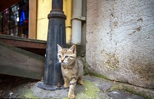 stray kitten istanbul