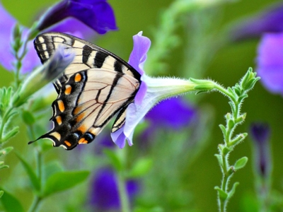 HD Flowers N Butterfly Desktop Wallpapers