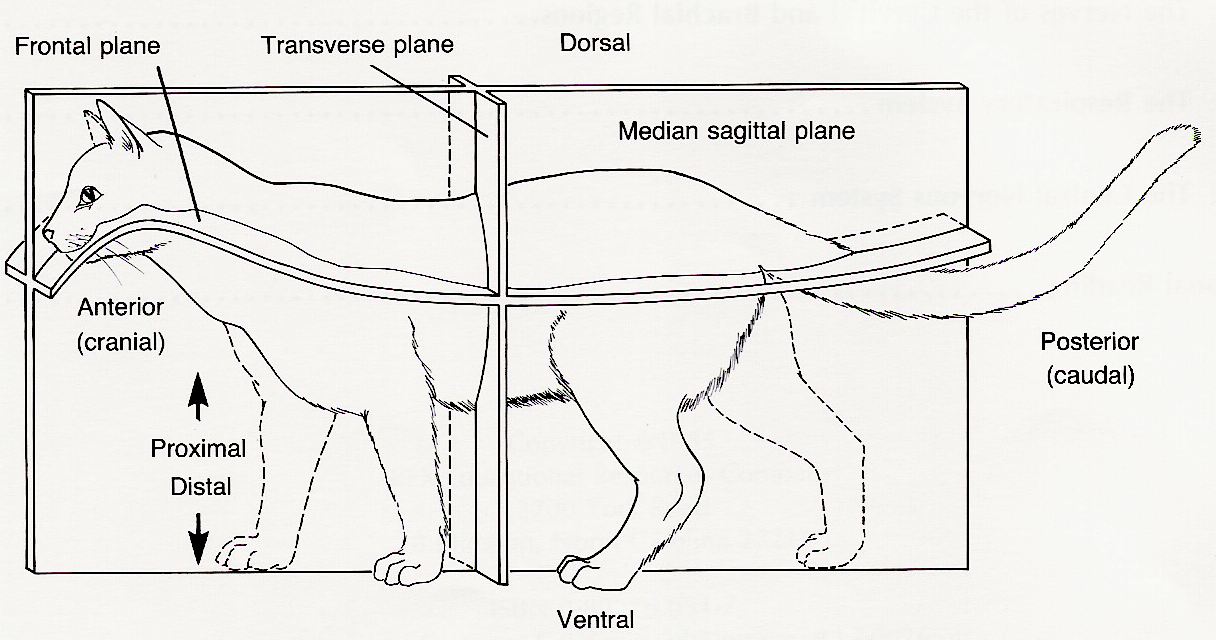 Cat Antomy External Diagram Wiring Library