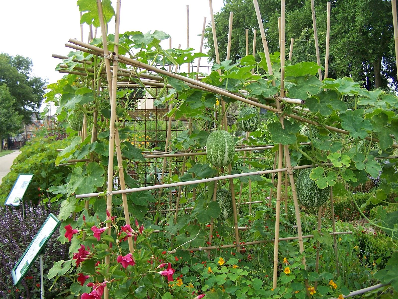 Ecolo bio nature permaculture urbaine et jardinage bio for Fabriquer une arche de jardin