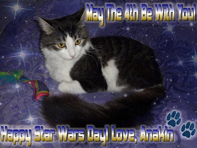 Anakin The Two Legged Cat, May The 4th Be With You! Star Wars Day