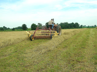raking hayfield 3