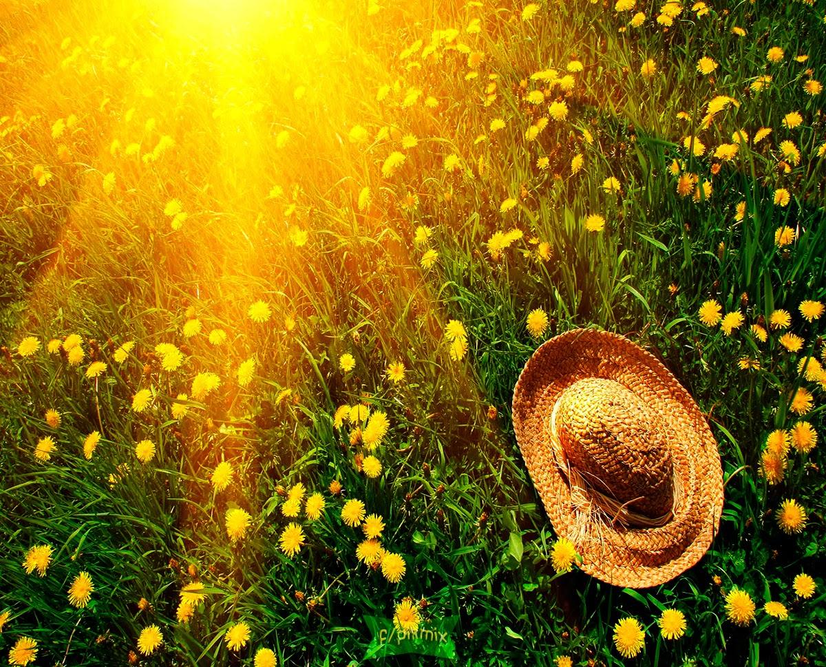 Sombrero sobre la yerba - Wallpaper -luz de sol, flores
