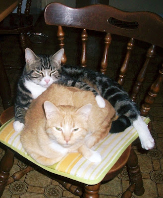 Winston and Sassy, two cats on a chair