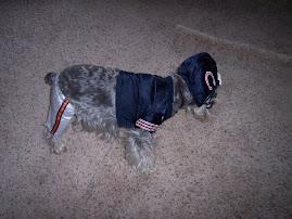 My Dog Payton