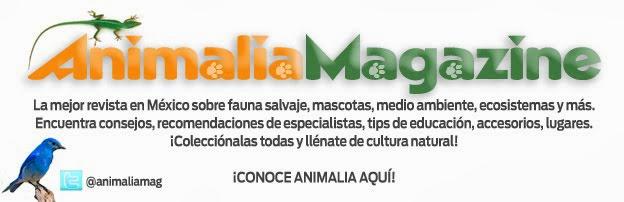 Animalia Magazine!