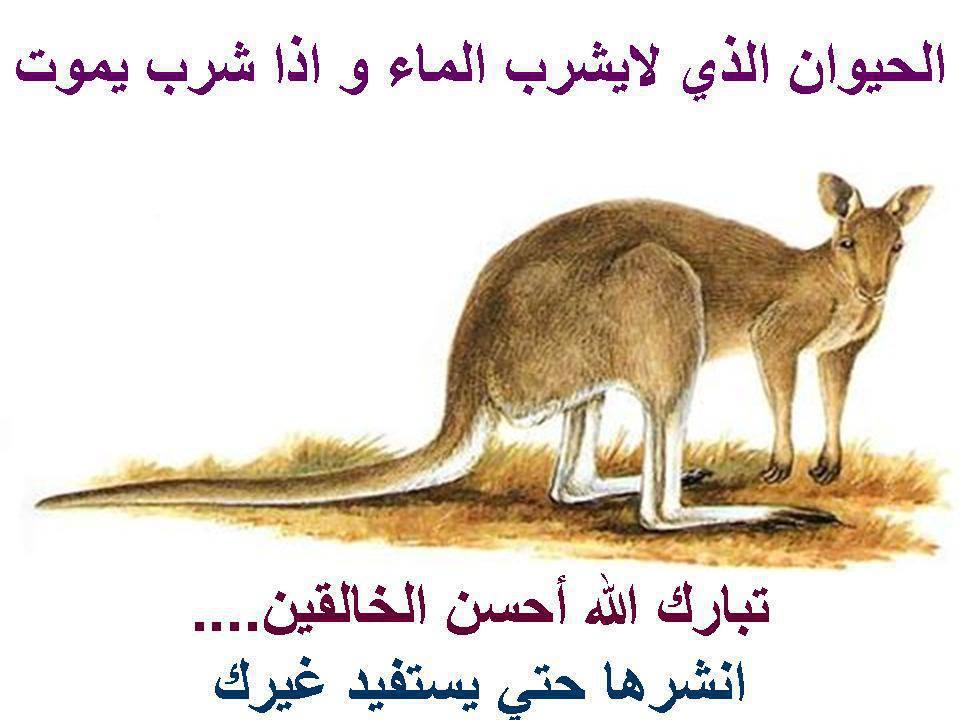 نتيجة بحث الصور عن حيوان لا يشرب الماء