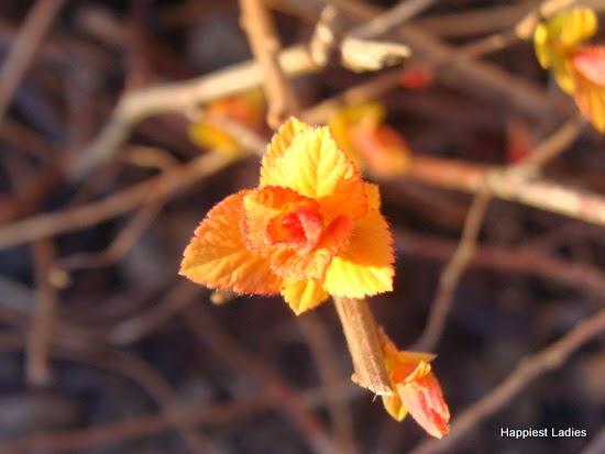 spring leaves 1