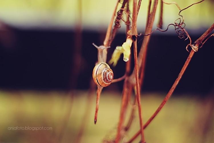 ślimak, ślimaki, fotografia przyrodnicza, deszcz, krople, ogród