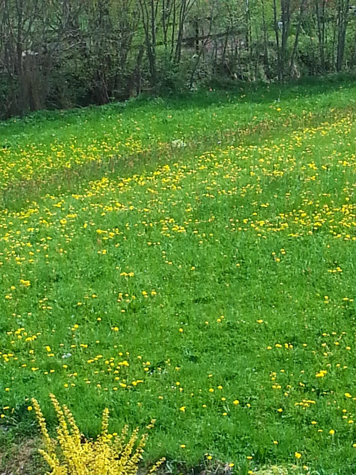 É primavera na Suíça!