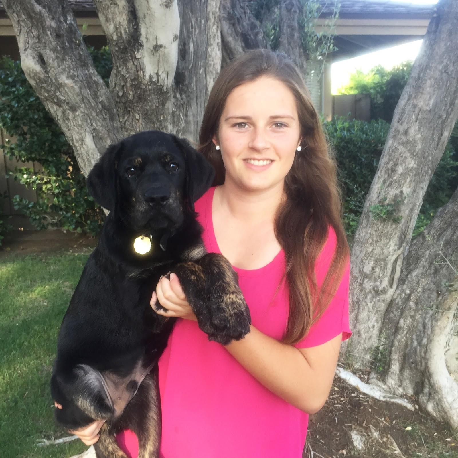 Guide dog puppy essay