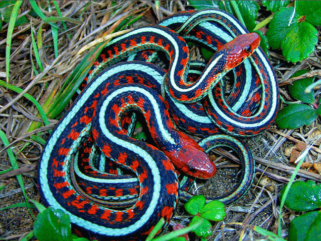Alabama Non Venomous Snakes http://biologicalexceptions.blogspot.com/2013/04/sneaky-snakes-biters-boobytraps-and-spit.html