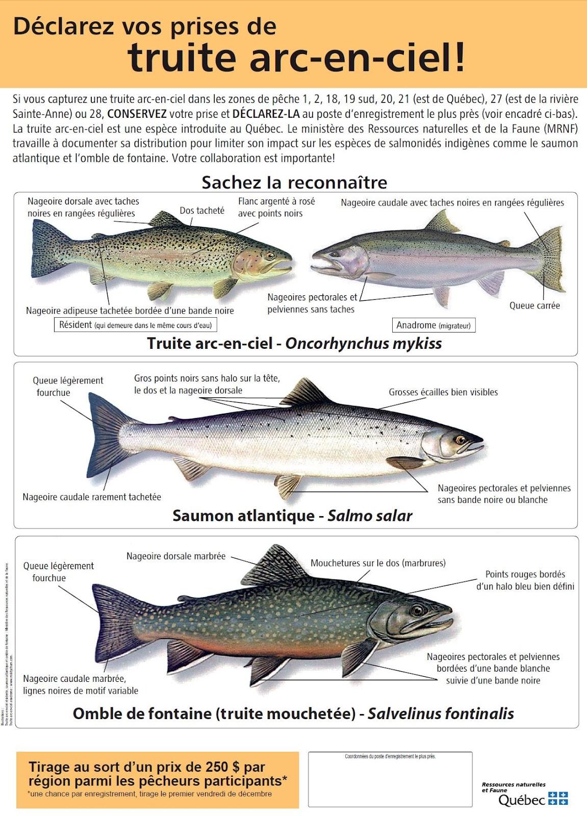 C0nnaissez vous ce poisson page 2 le parloir qu becp che page 2 - Difference entre sisal et jonc de mer ...