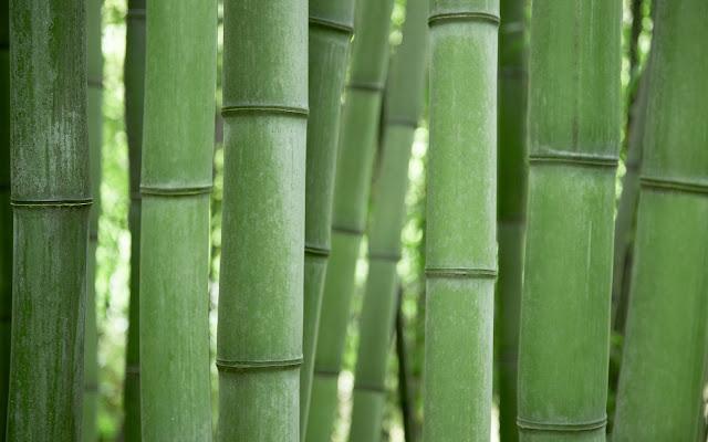 Bamboo Grove2