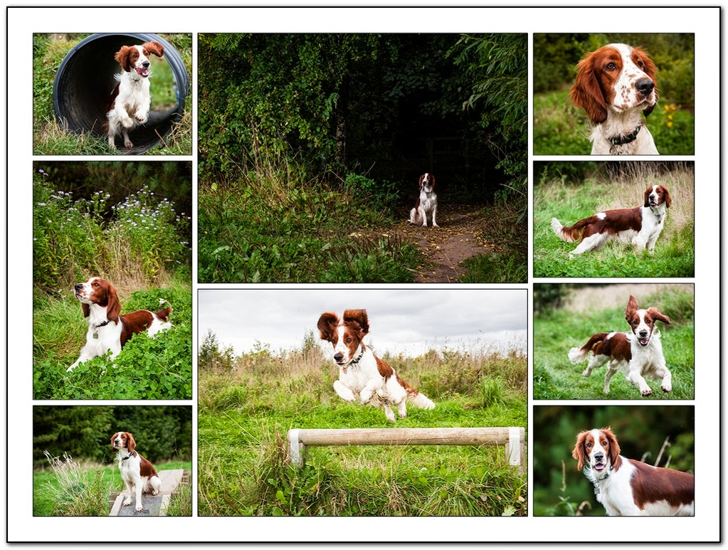 north east dog portrait voucher code by hairy dog photography
