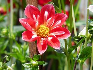 田舎暮らし物件の購入は(東京の)古民家などの賃貸からBlogの花