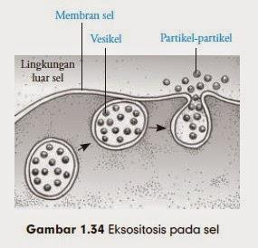 Eksositosis pada sel