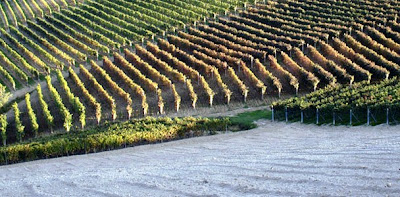 I viaggi del goloso percorsi di vini il dolcetto d for Terreni piantati a meli