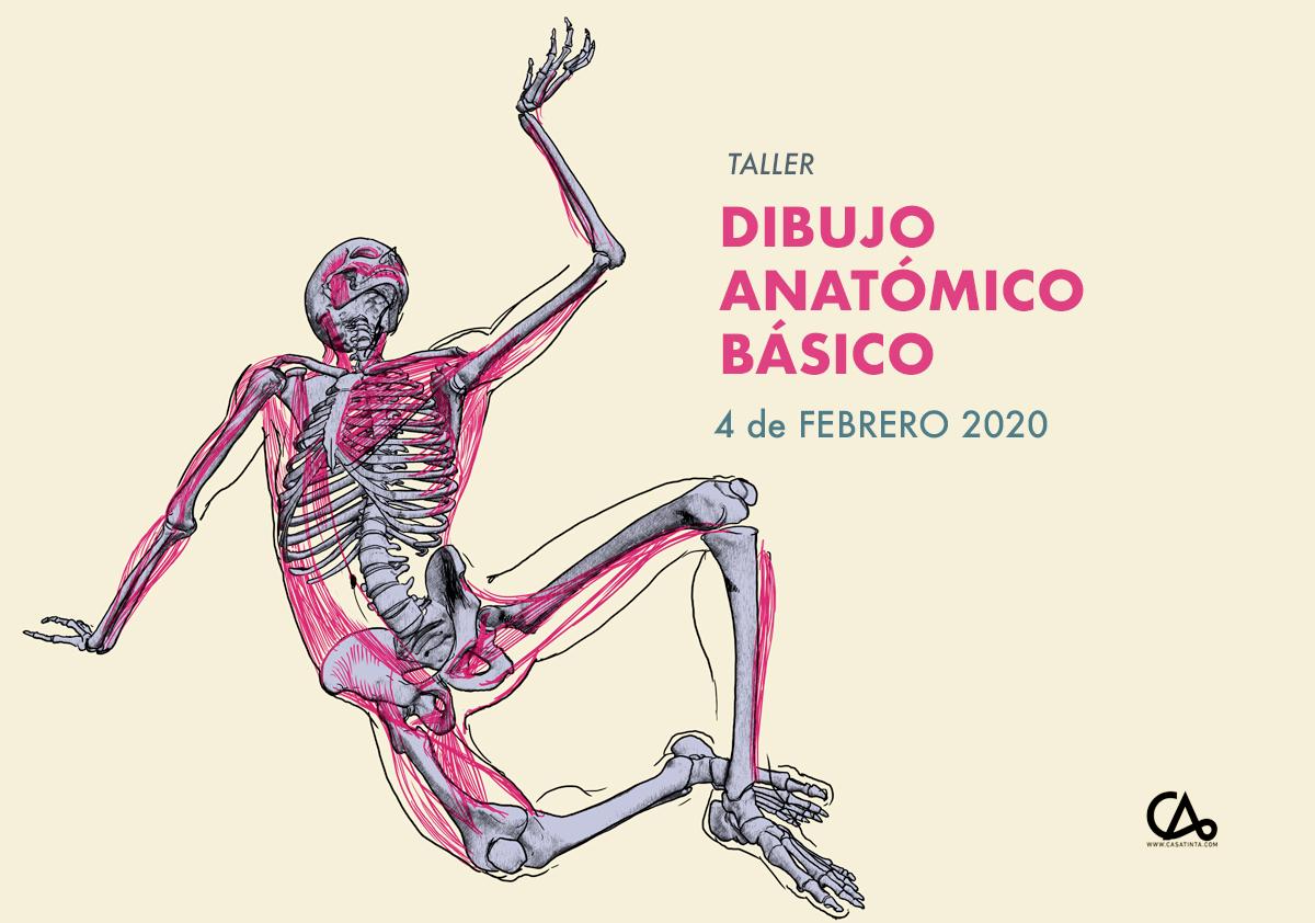 DIBUJO ANATÓMICO BÁSICO // 4 de feb