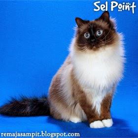 Macam-Macam Pola Warna pada Kucing