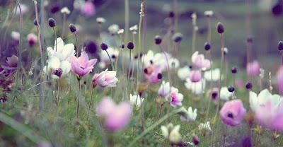 ảnh đẹp các loài hoa