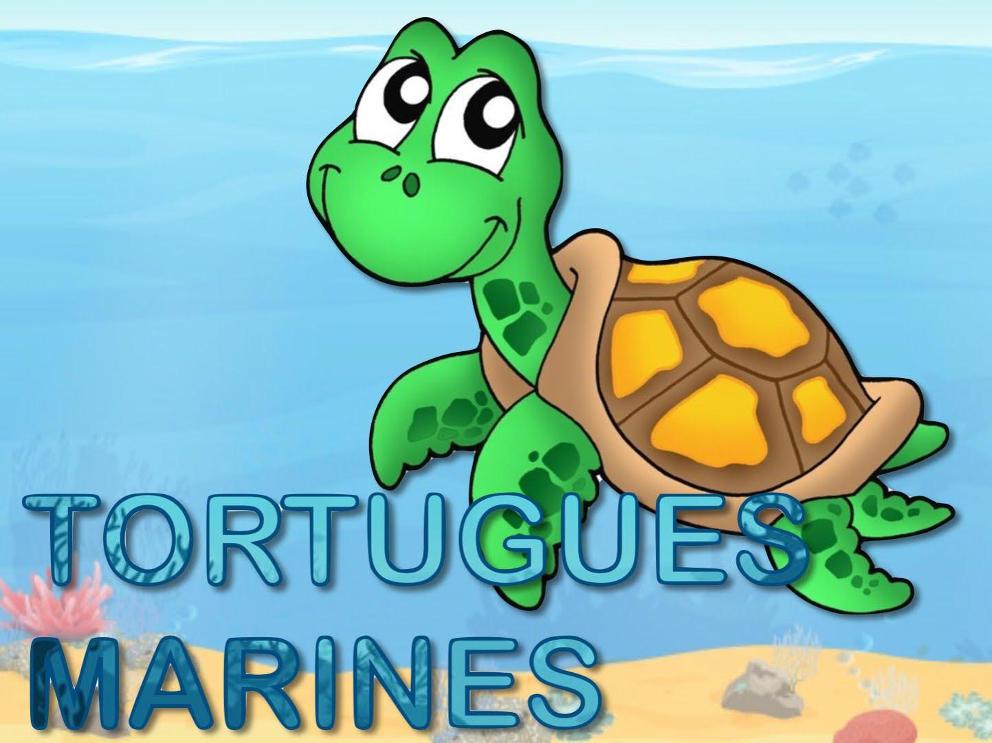 EI3A TORTUGUES MARINES