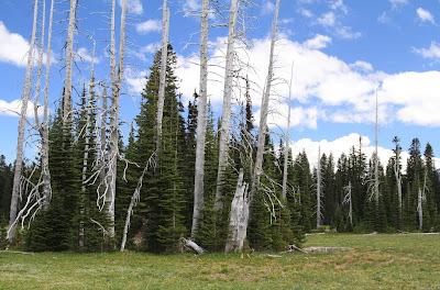 Curious Dead Trees Along the Edge of Grand Park