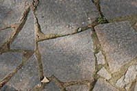 Cracked tiles and moss