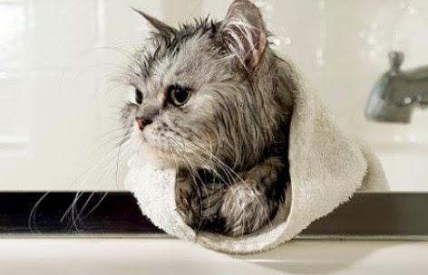 selimuti-kucing-dengan-handuk