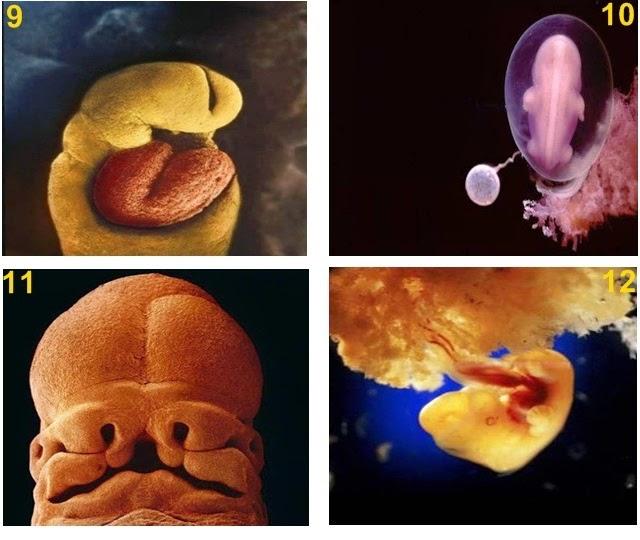 23 Gambar Proses Kejadian Manusia Yang Menakjubkan!
