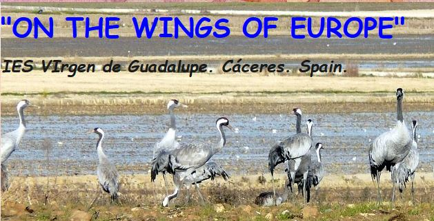 On the Wings of Europe